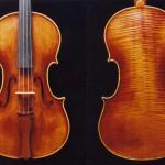 Viola6